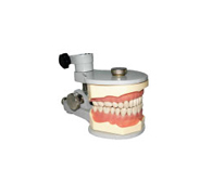 Jaw Set with metal