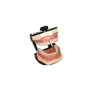 Jaw Set With Plastic Articulator